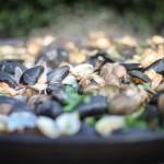 Fresh seafood paella